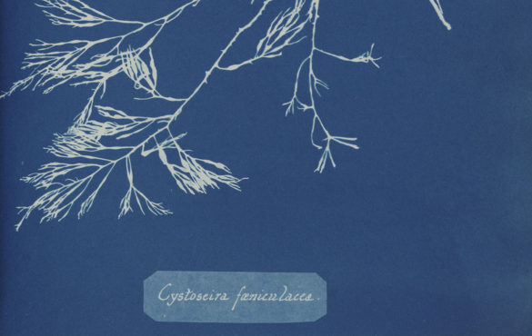 Photo Cyanotypes 1
